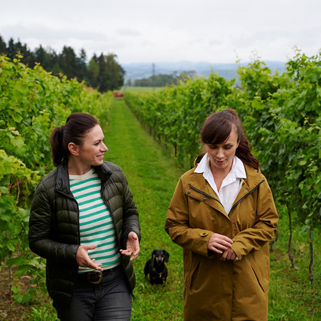 Vinodea | Weinhandlung | Weine von Winzerinnen | Shop | Gusterhof Wurm